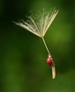parachutebeetle